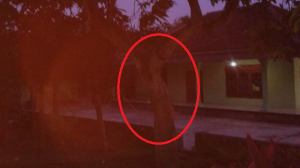 Hantu Pohon Mangga